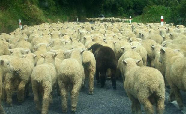 Kein schwarzes Schaf im Lenkungskreis zu Stuttgart 21
