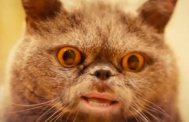 """Katze """"Salvador"""" aus dem Musikvideo"""