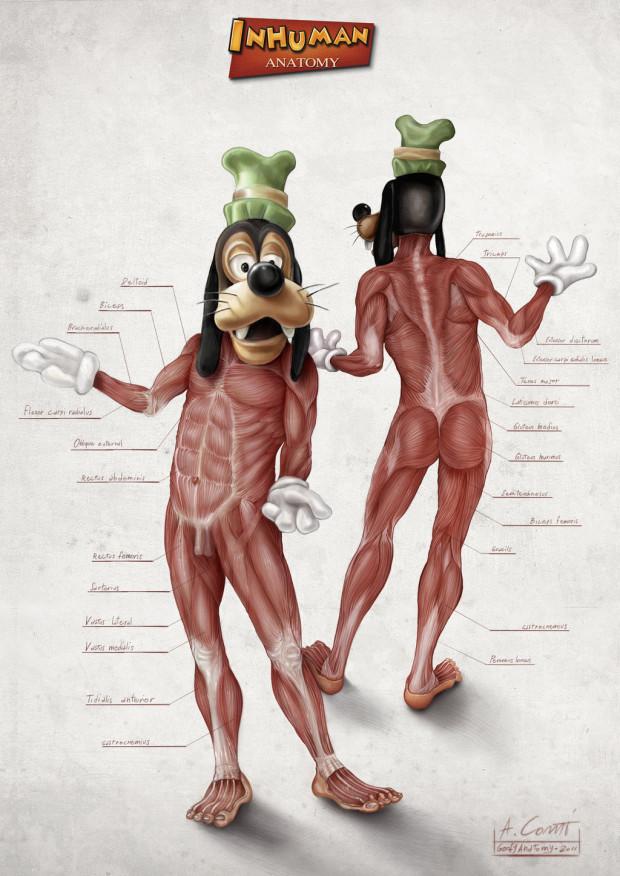 Goofy Anatomie Alessandro Conti