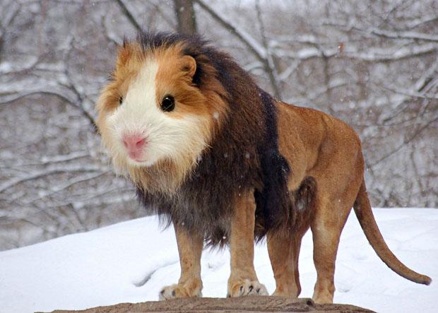 """""""Guinea Lion"""" von Gyyp"""