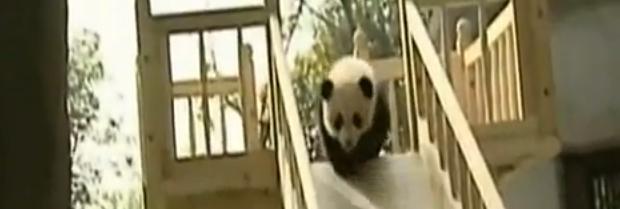 panda auf rutsche
