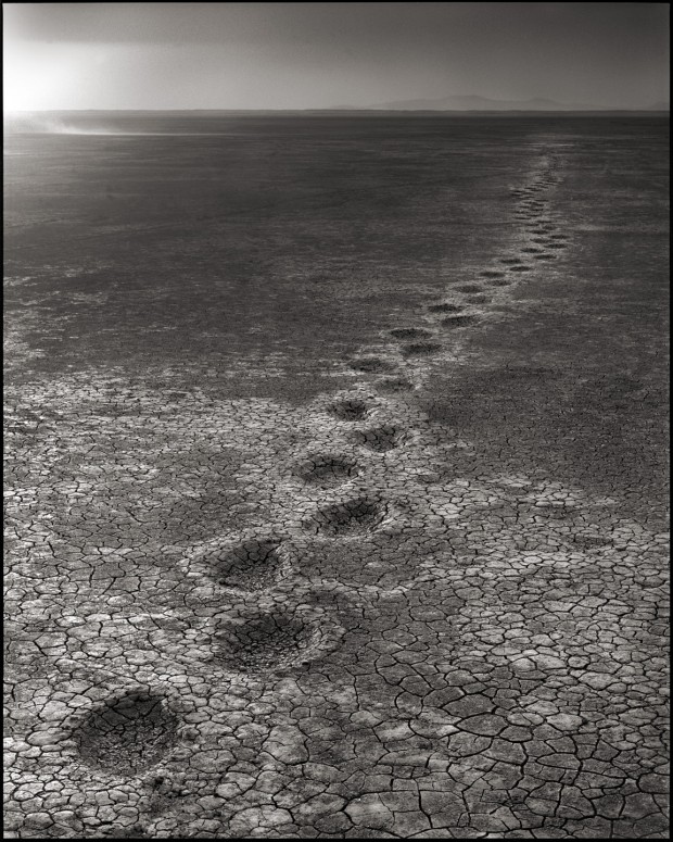 Elephant Footprints on Lake Bed