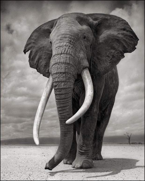 Elephant on Bare Earth