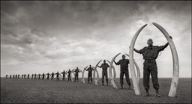 Rangers with Tusks of Killed Elephants