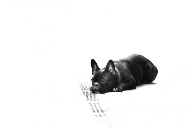 hund budapest