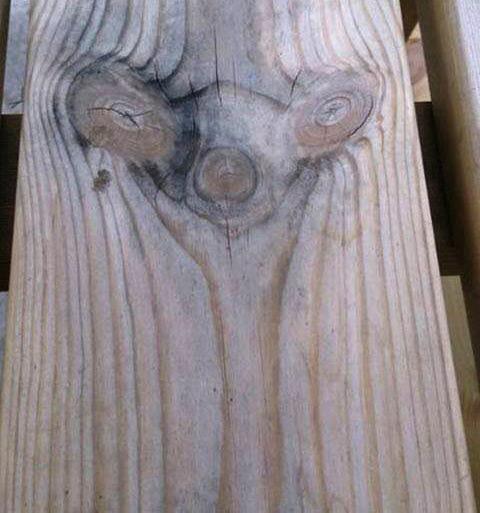 sid ic age holz wood