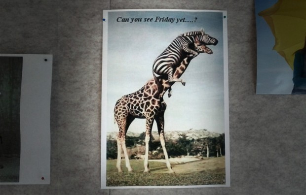 can you see friday yet giraffe zebra tiere