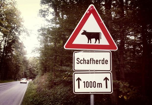 Verkehrsschild Schafherde oder Kühe
