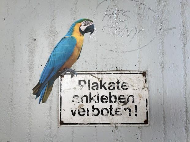 plakate ankleben verboten papagei ara